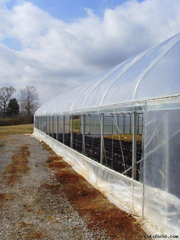 lift curtain  greenhouse