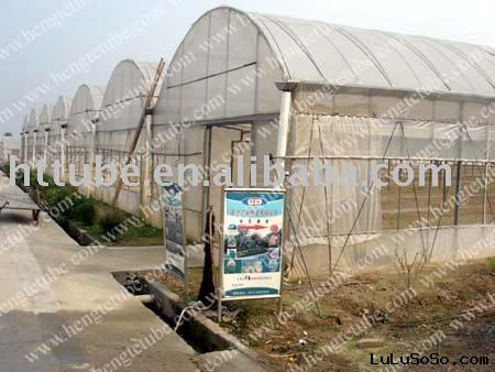steel pipe greenhouse ,steel tube greenhouse,greenhouse120