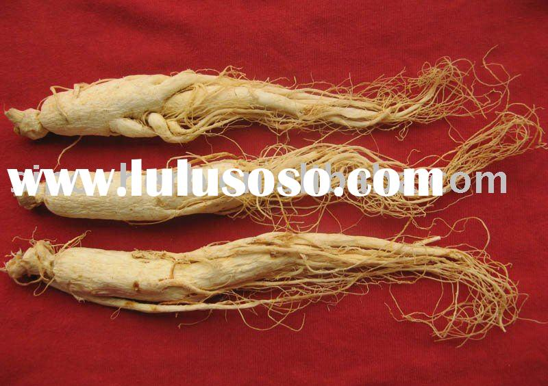 Ginseng Root Extract Powder