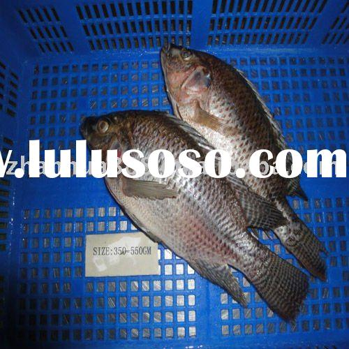 frozen fish seafood