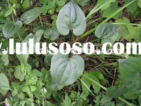 India Madder Root Extract