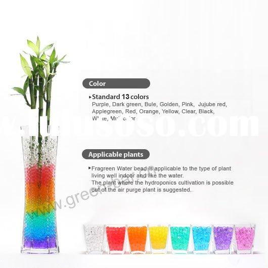 chinese lucky bamboo planting by water beads