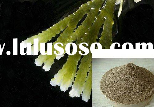 Plant Extract---Seaweed Extract