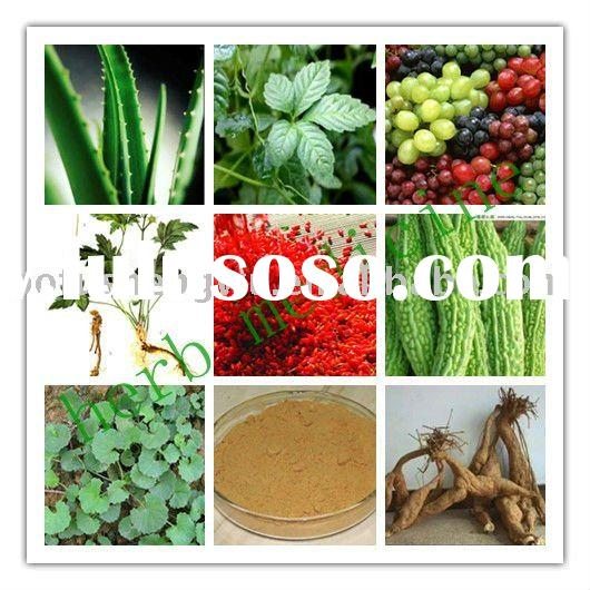 Natural herb plant High quality Manufactory Herb medicine