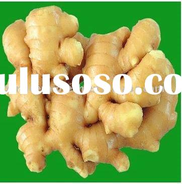 Ginger Root Extract Powder
