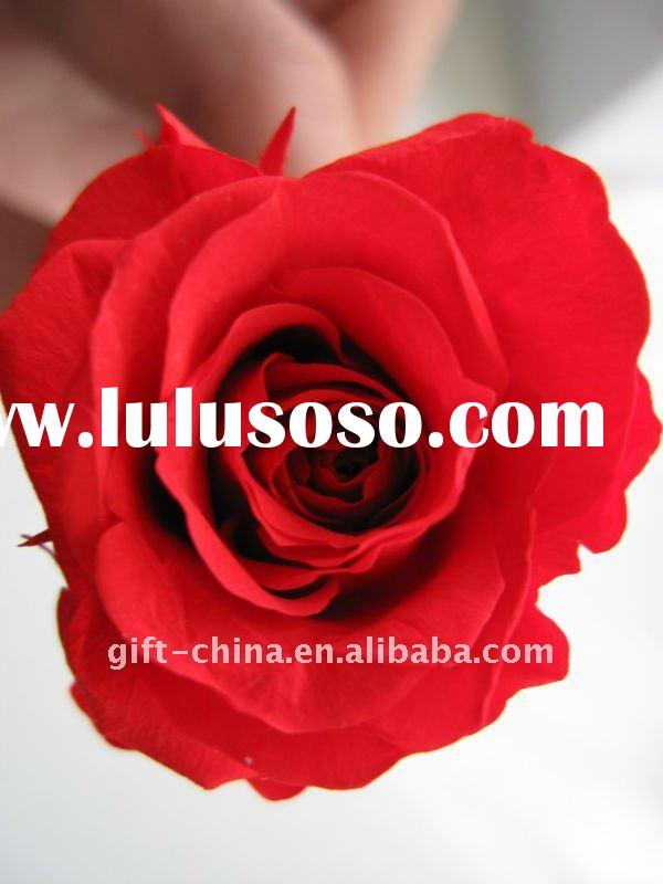 Yunnan China Preserved Flower Top Quality
