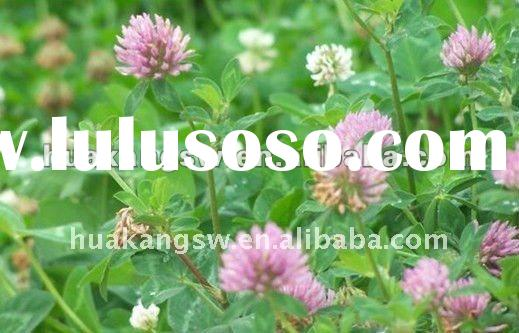 Organic Red Clover extract;isoflavone5-8% tested by HPLC;in stock