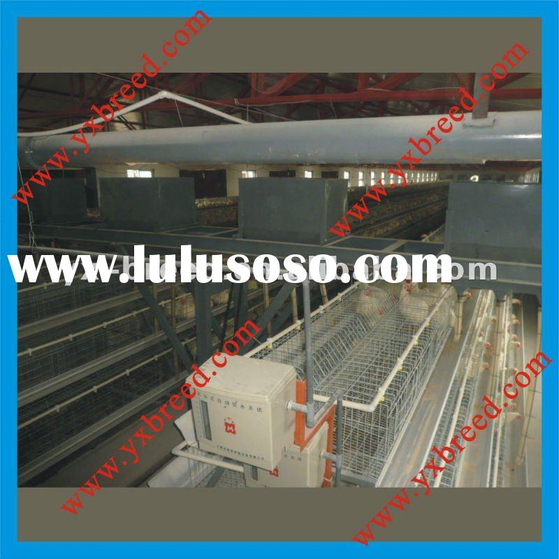 Automatic Chicken Feeding Equipment for farms