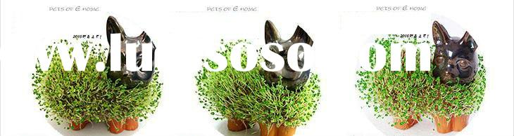 Free shipping!!Top Selling DIY Pet magic grass cultivation Mini indoor plant A19-27-10