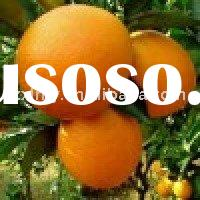 Fruits Fresh Orange