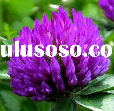 Natural Plant extract Red Clover P.E 40%Isoflavones