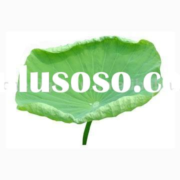 100% natural Touchi Extract Powder