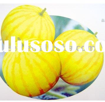 Golden King hybrid yellow watermelon seed with golden rind and red flesh