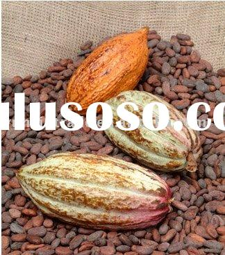 High quality Cocoa seed extract powder(p.e)20% theobromine