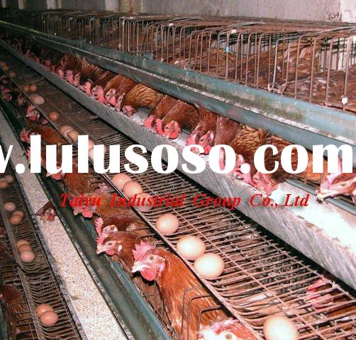 chicken egg poultry farm (manufacture,design)