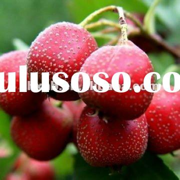 hot products hawthorn berry extract fructus crataegi