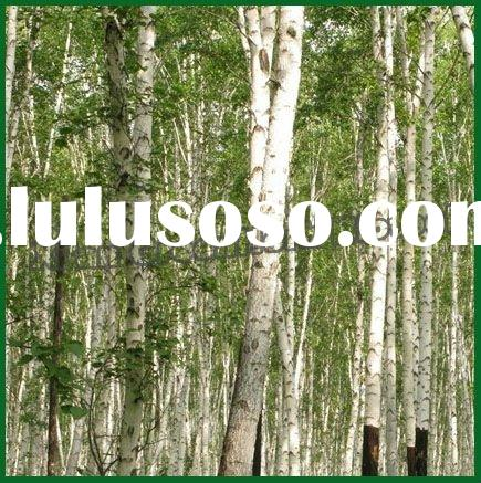 medicinal plant extraction White Birch Bark Extract Betulin 70% 90% 98%; Betulinic acid 50% 90% 98%