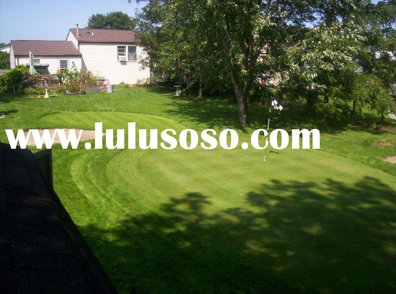 Artificial Outdoor Putting Greens backyard