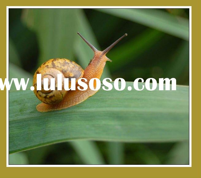 Snail Extract/Anti-Aging, Anti-Wrinkle/protein