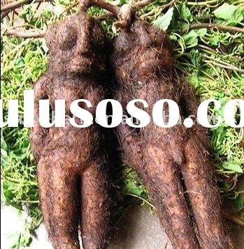 anti-aging herb extract