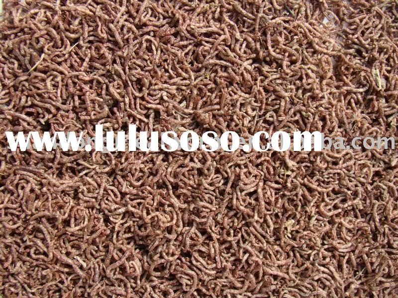 bloodworm pet fish feed
