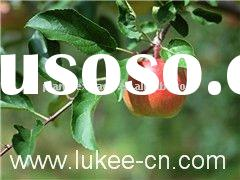 Green apple polyphenols extract for anti-aging
