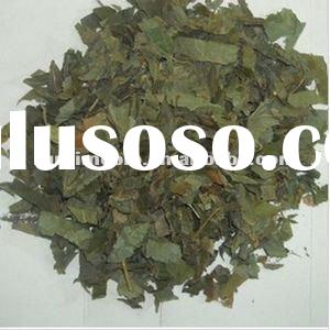 Medicinal plant extraction Epimedium Extract/solvent extraction plant