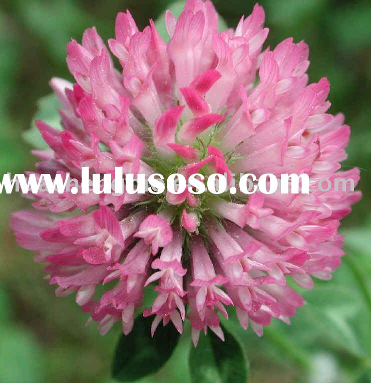 Professional producing Red Clover Extract 8%-40% Isoflavones