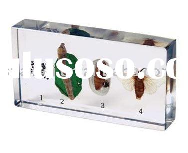 paperweight, acrylic paper weight, acrylic block