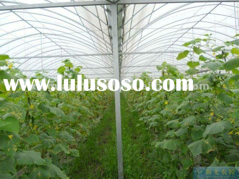 Multi-Span Agricultural Greenhouse Film