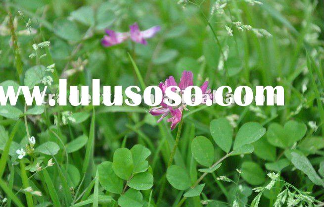 100% prue natural plant extract- Alfalfa Extract