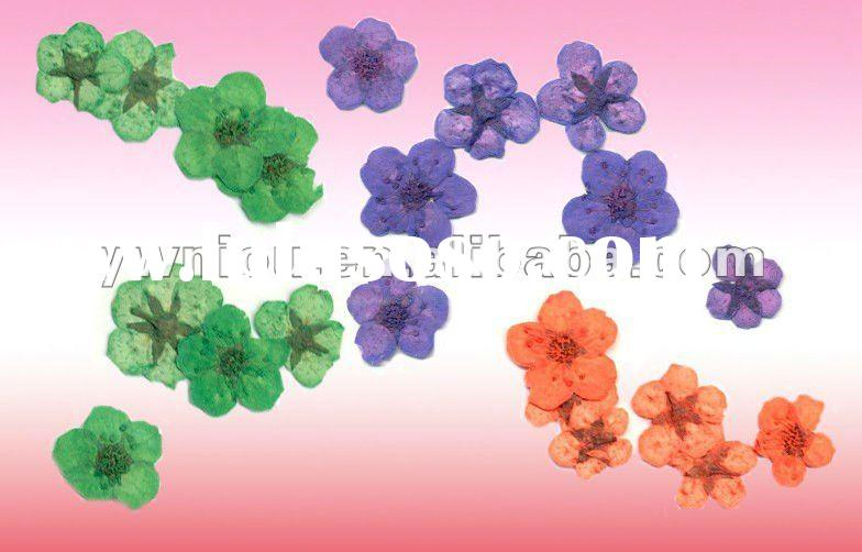 dry flower nail art water stickers