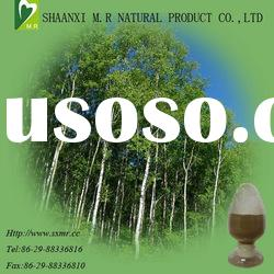 top quality Birch Leaf extract ( 10:1 )