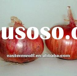 Fresh red onion in 10kg carton package. 2011 crop.MOQ:1X40FCL
