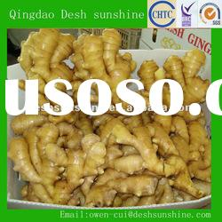 Export new crop fresh ginger from China