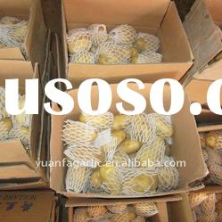 High Quality Fresh Holland Potatoes Price