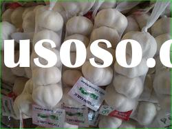 Sell Chinese White Garlic - new crop, low cost