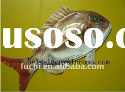 2011 hot sale cute Fish/Toy fish/Inflatable Fish for child with customize logo