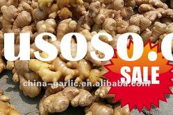 China Fresh Ginger 2012 Crop - low cost, high quality