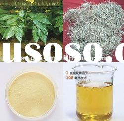 Gingseng powder/Panax Ginseng Root Extract Powder Ginsenosides : 5-80% (HPLC/UV)