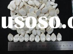 Chinese high quality white pumpkin seeds