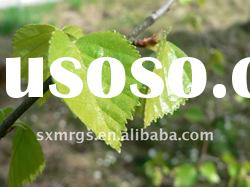 Birch Leaf extract powder ( 10:1 )