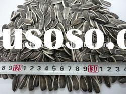 Chinese high quality sunflower seeds for sale seed sunflower