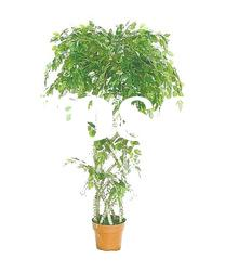 Artificial ficus tree with net shape