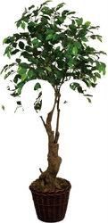 Small Artificial Ficus Tree