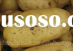 Qualified Fresh Holland Potatoes