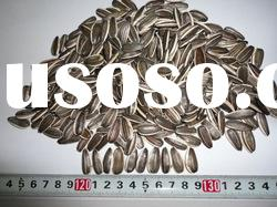 Chinese high quality sunflower seeds for sale