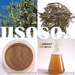 Natural Extract-- olive leaf P.E. powder