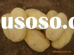 fresh holland potatoes (russet potato) in china 150g
