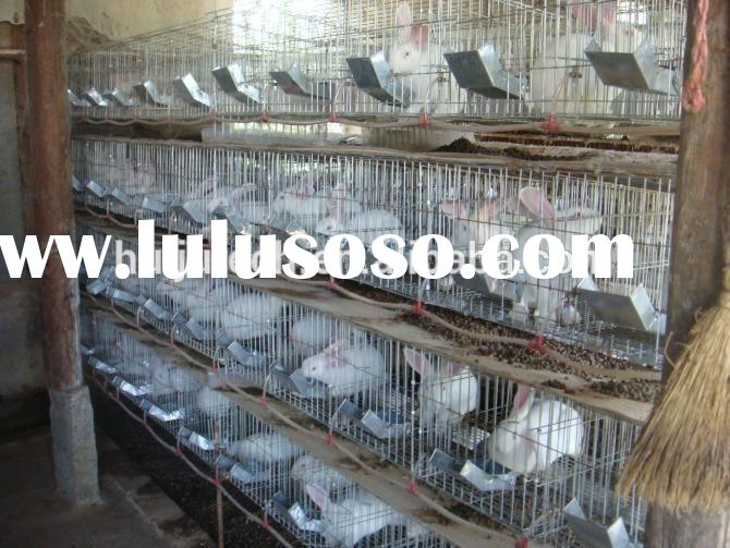portable rabbit cage/Layer Egg Chicken Cage//Poultry Farm House Design